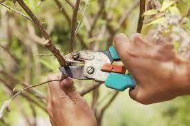 Типы услуг по обрезке сада